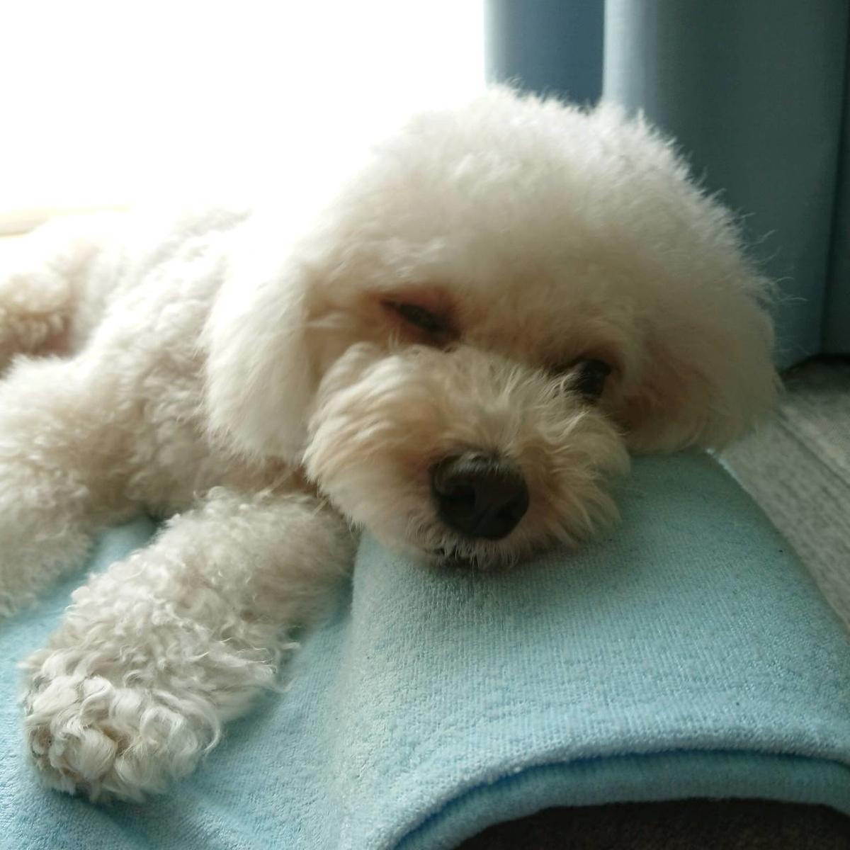 f:id:kotaro-dog:20210711222026j:plain