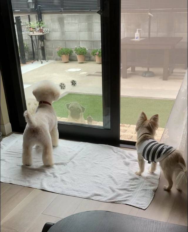 f:id:kotaro-dog:20210713011703j:plain