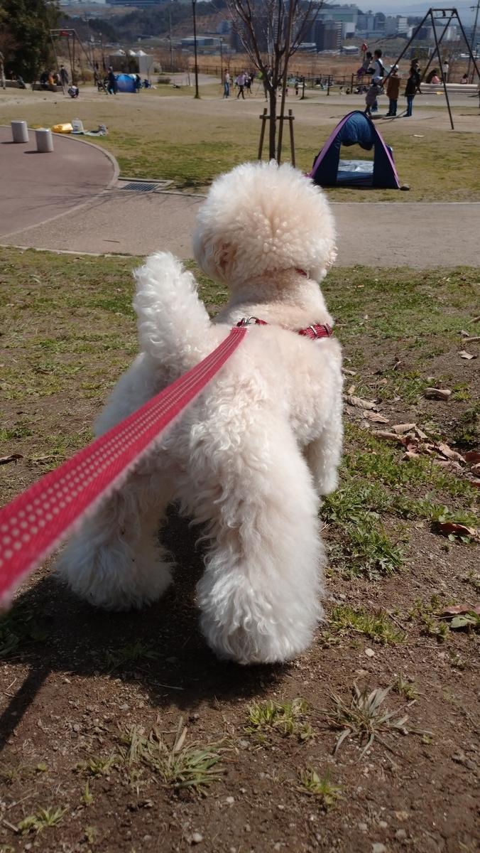 f:id:kotaro-dog:20210714011310j:plain