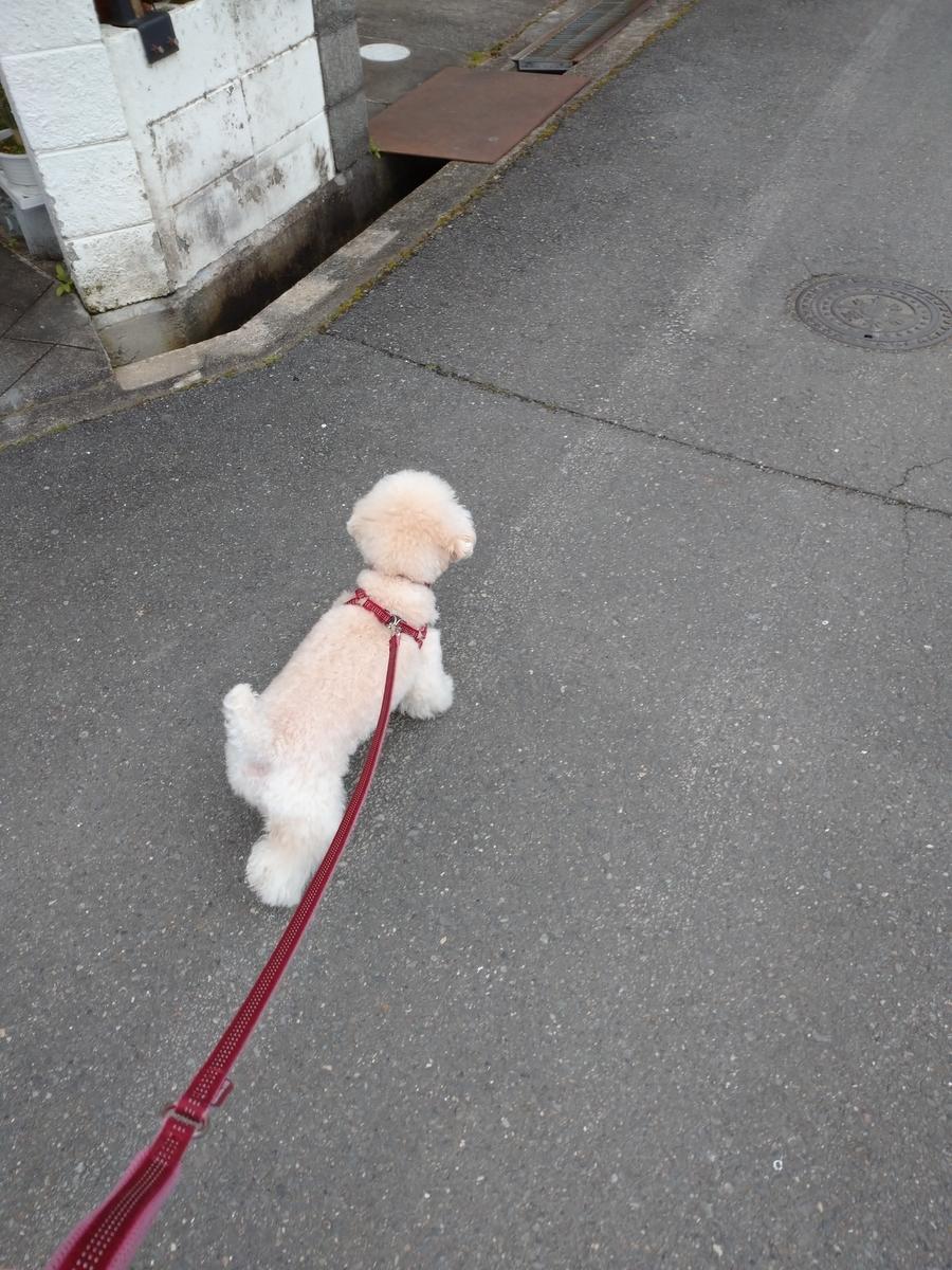 f:id:kotaro-dog:20210714015246j:plain