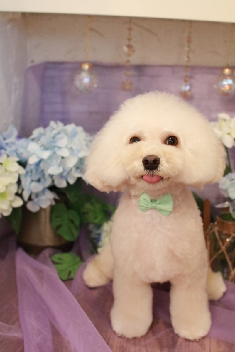 f:id:kotaro-dog:20210715001323j:plain