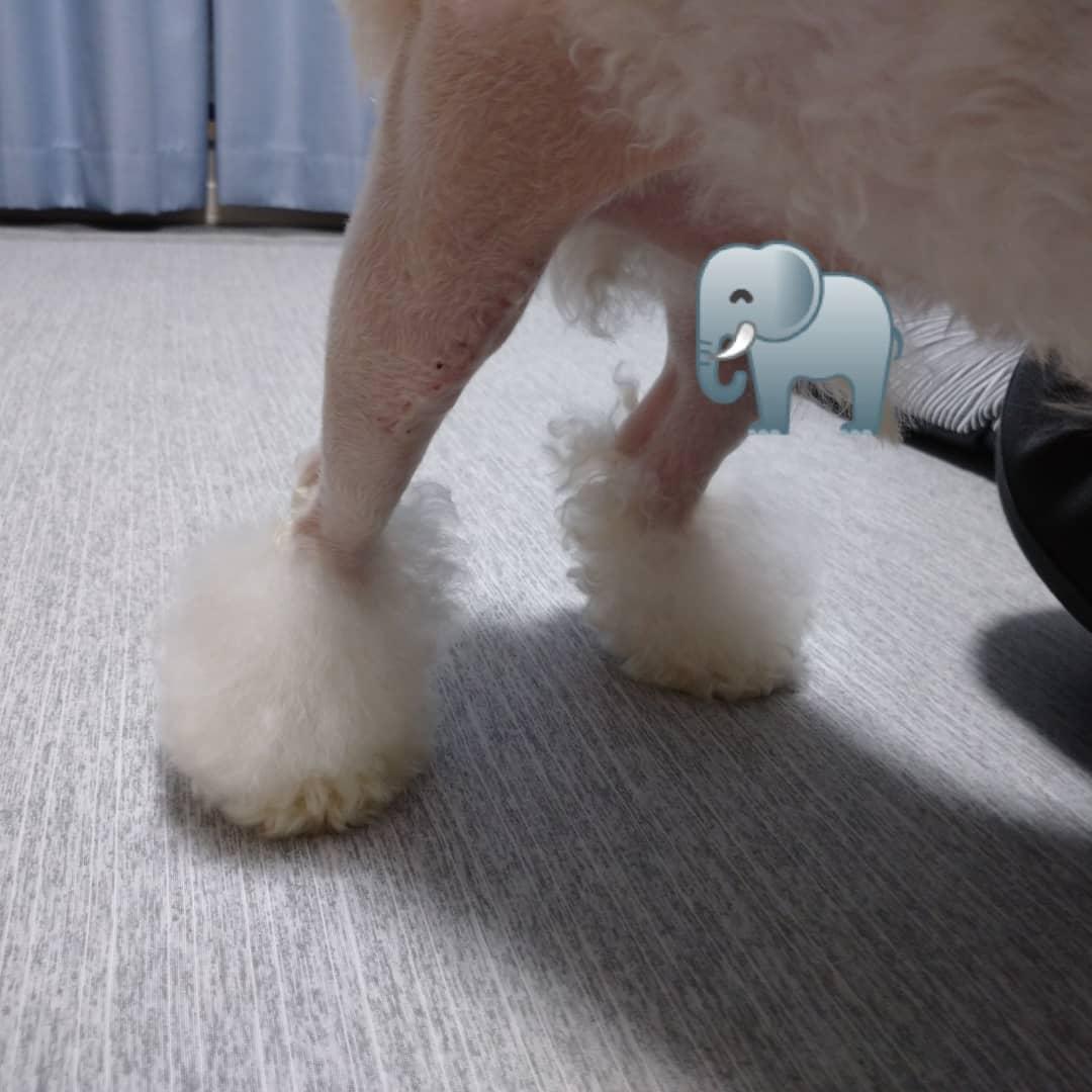 f:id:kotaro-dog:20210715014128j:plain