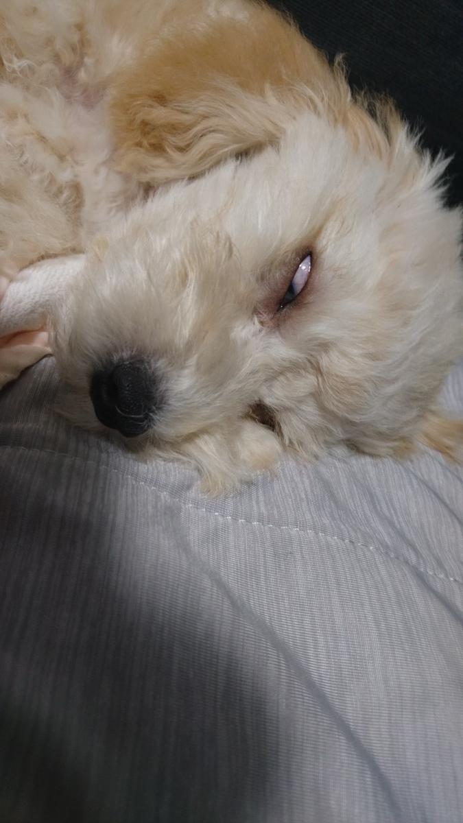f:id:kotaro-dog:20210716005539j:plain