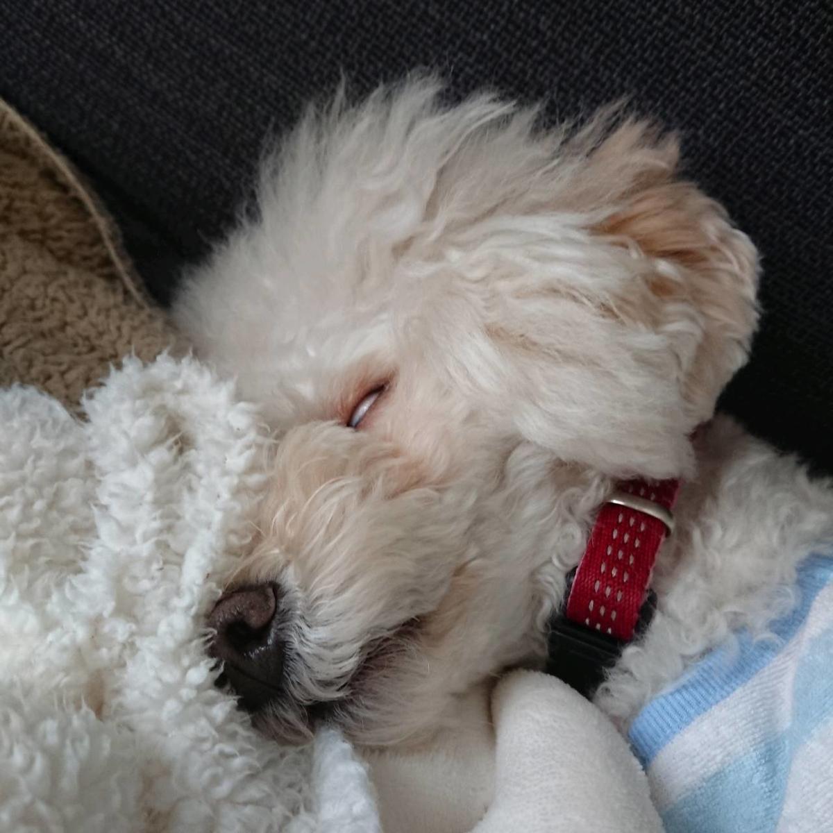 f:id:kotaro-dog:20210716005812j:plain