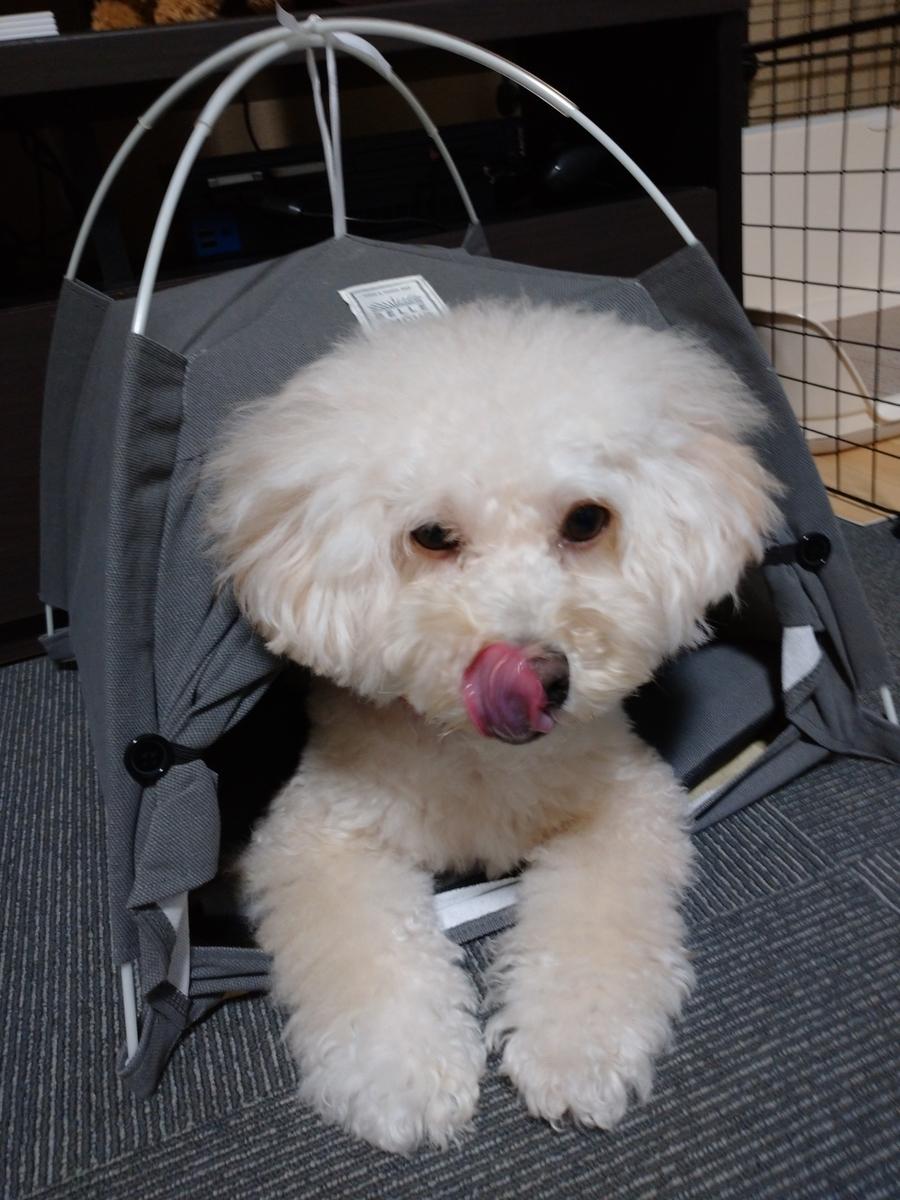f:id:kotaro-dog:20210717221223j:plain