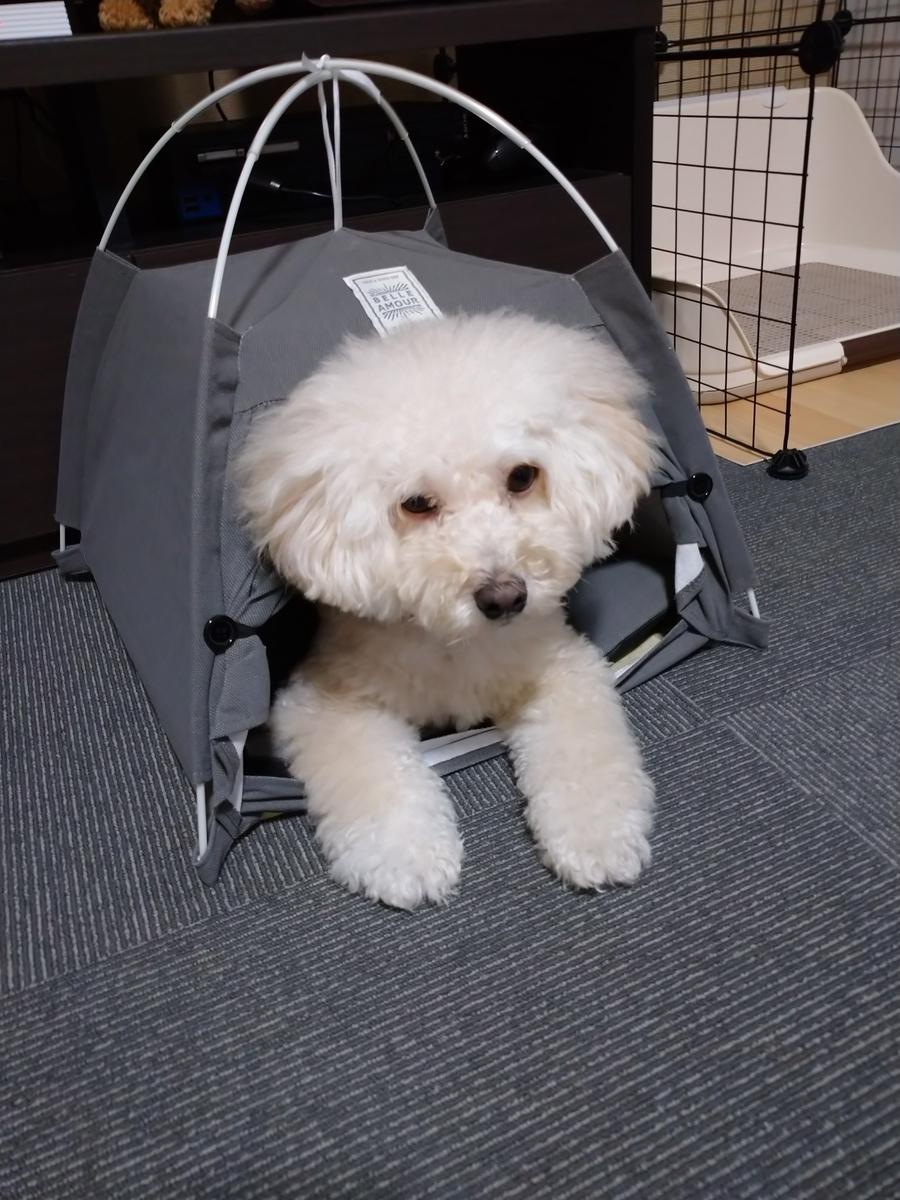 f:id:kotaro-dog:20210717223343j:plain