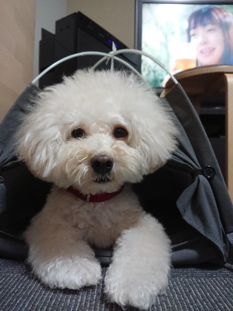 f:id:kotaro-dog:20210717225351j:plain