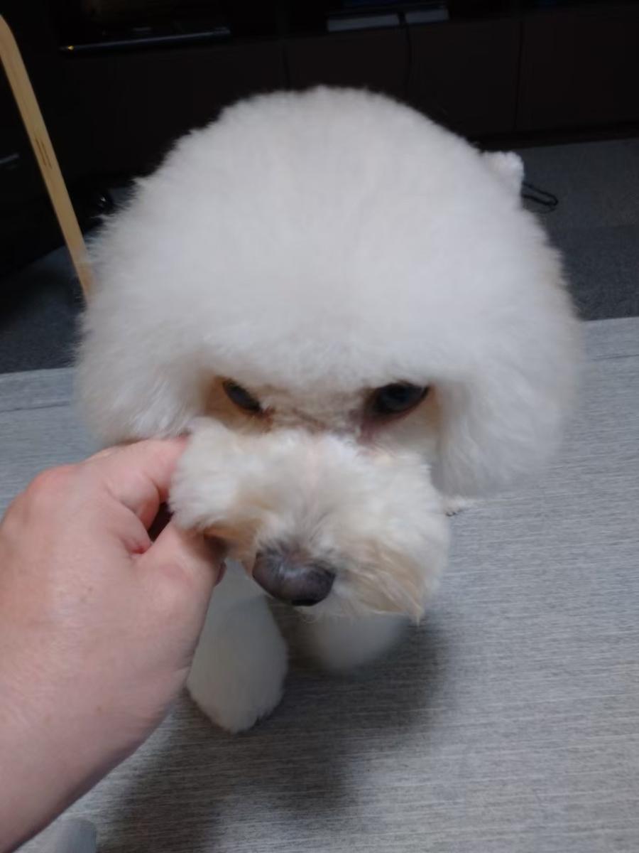 f:id:kotaro-dog:20210721011339j:plain