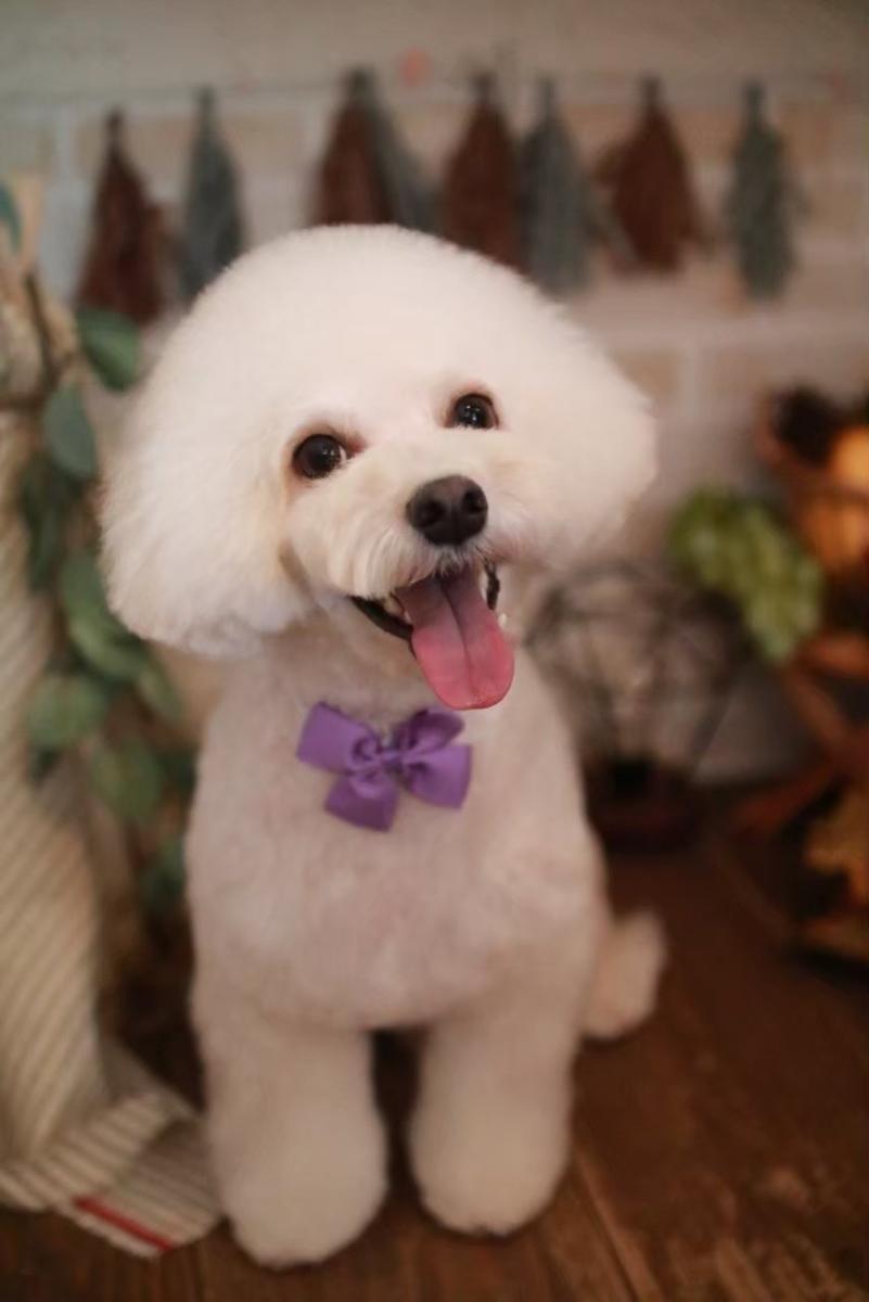 f:id:kotaro-dog:20210722233058j:plain