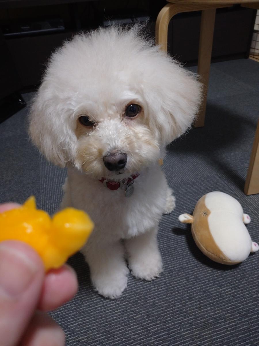 f:id:kotaro-dog:20210723004012j:plain