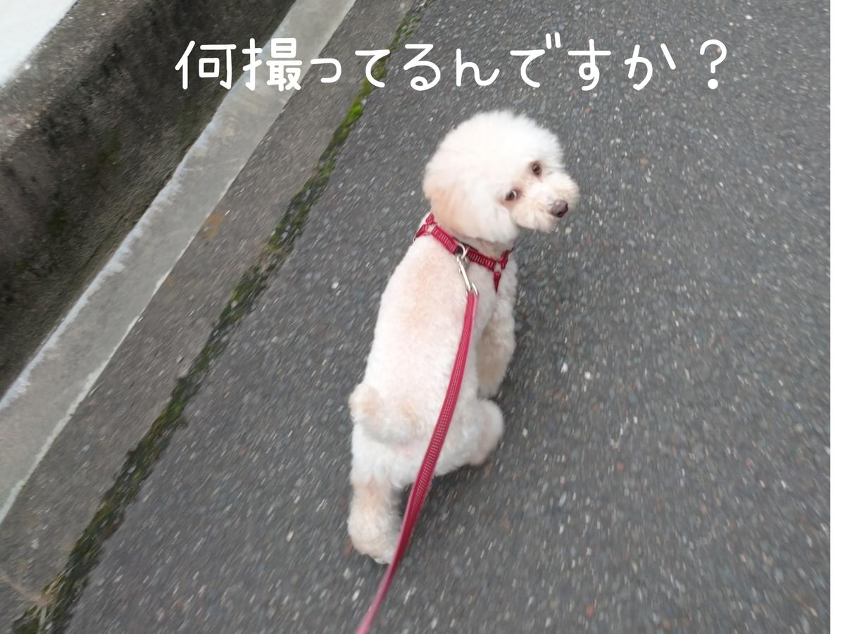f:id:kotaro-dog:20210724213601j:plain