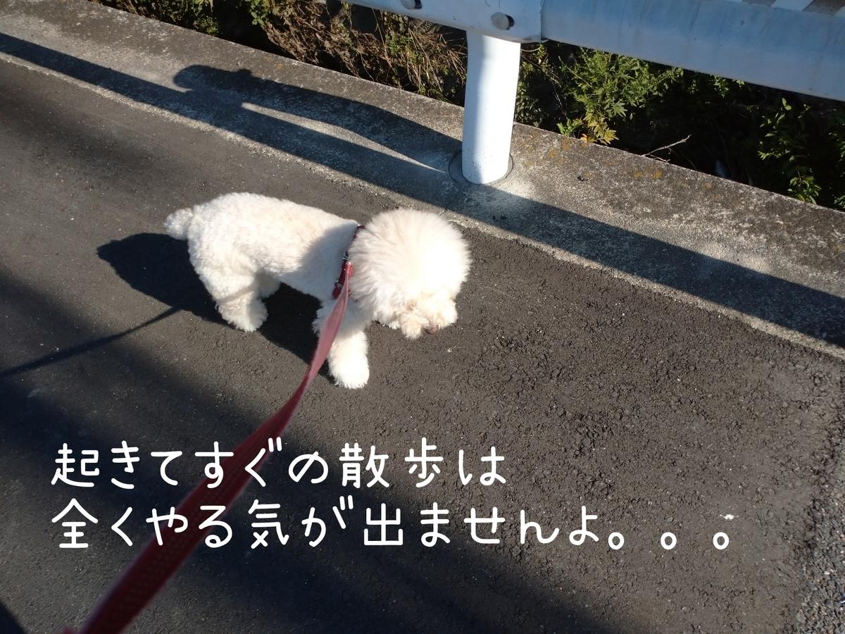 f:id:kotaro-dog:20210724214014j:plain
