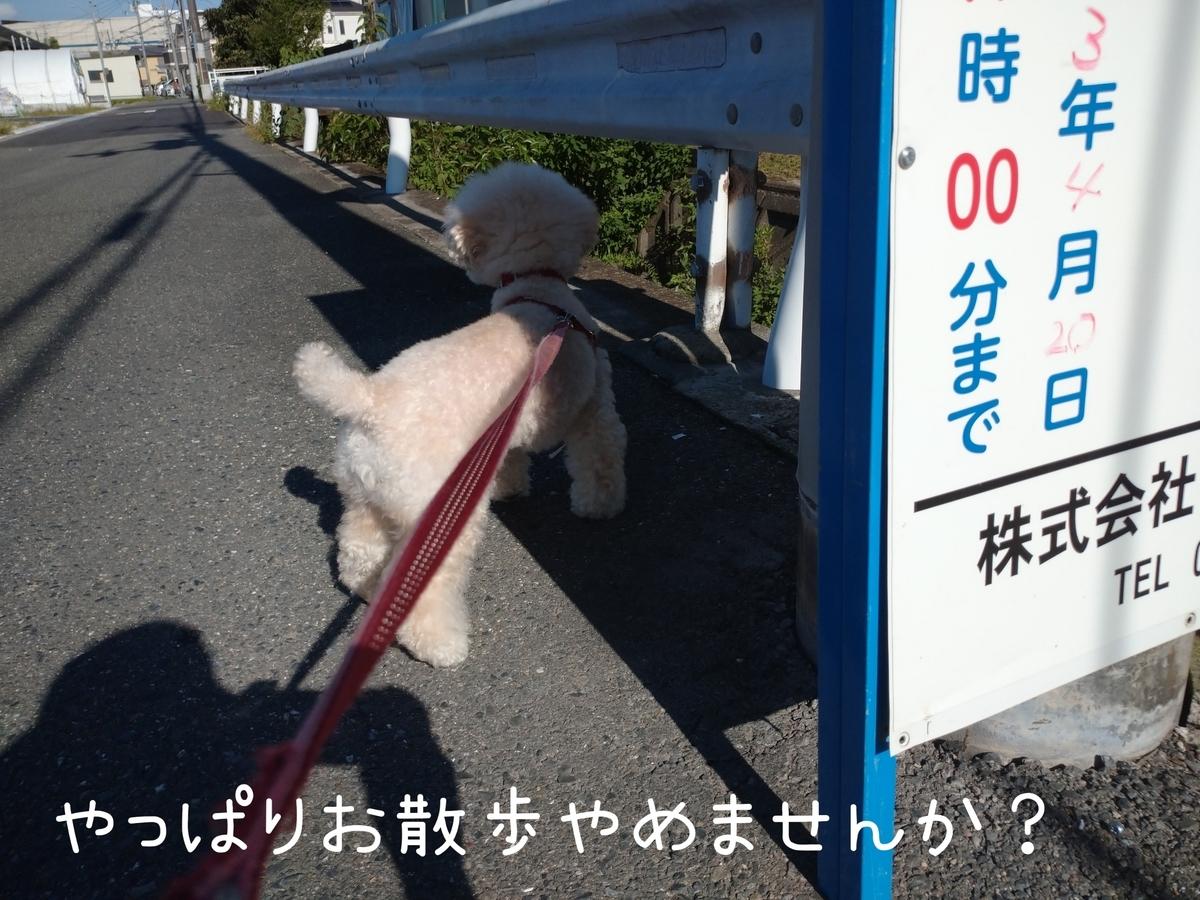 f:id:kotaro-dog:20210724214258j:plain