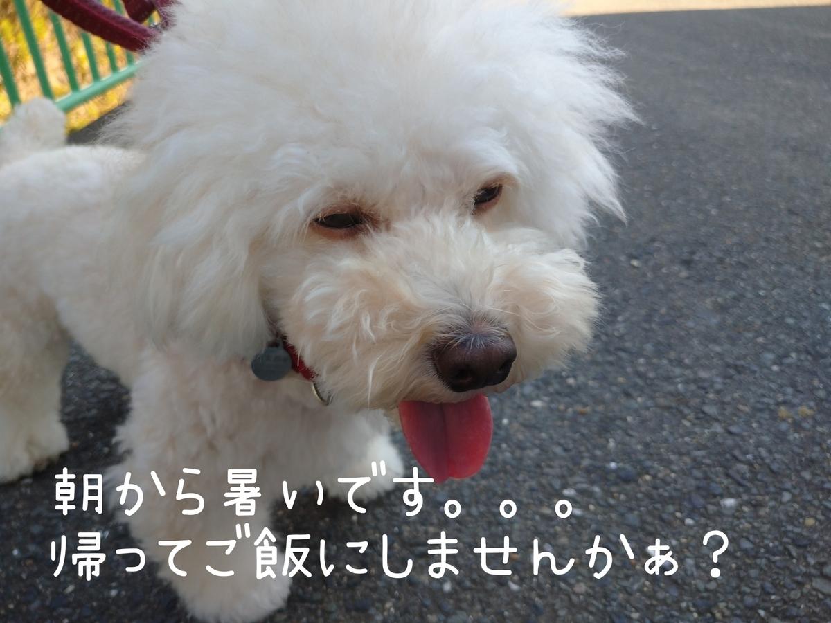 f:id:kotaro-dog:20210724214421j:plain