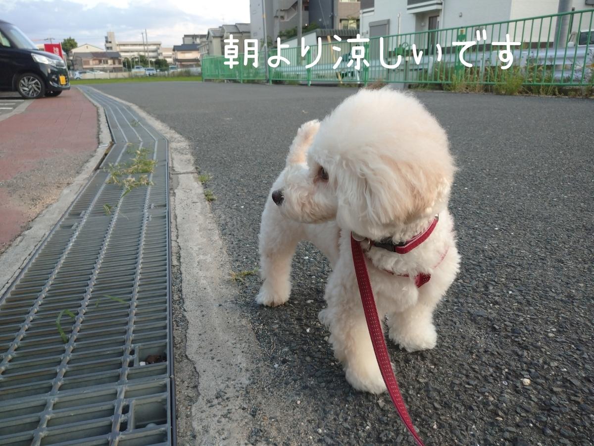 f:id:kotaro-dog:20210724214718j:plain