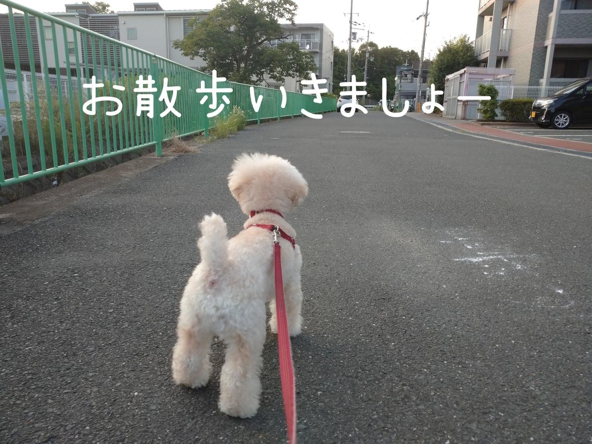 f:id:kotaro-dog:20210724214738j:plain