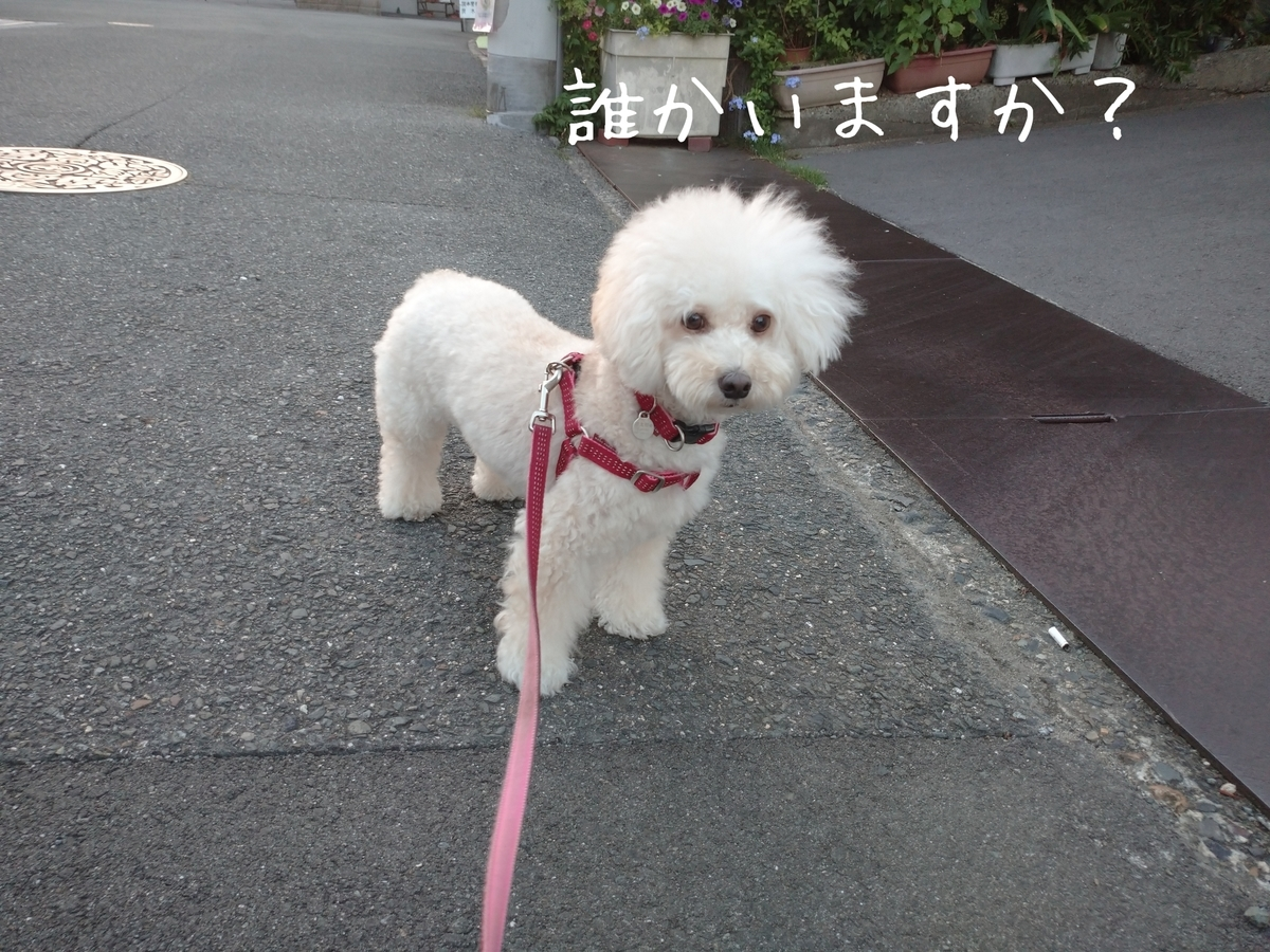 f:id:kotaro-dog:20210724214808j:plain