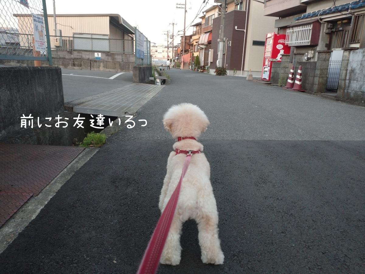 f:id:kotaro-dog:20210724214831j:plain