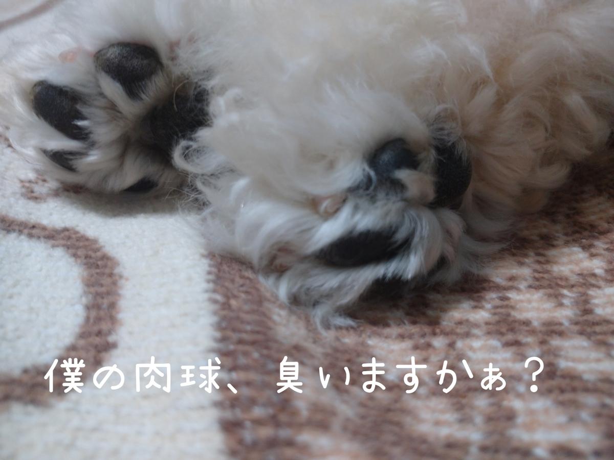 f:id:kotaro-dog:20210725012019j:plain