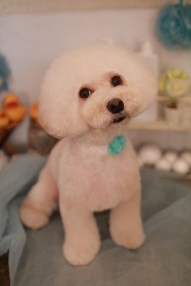 f:id:kotaro-dog:20210725210706j:plain