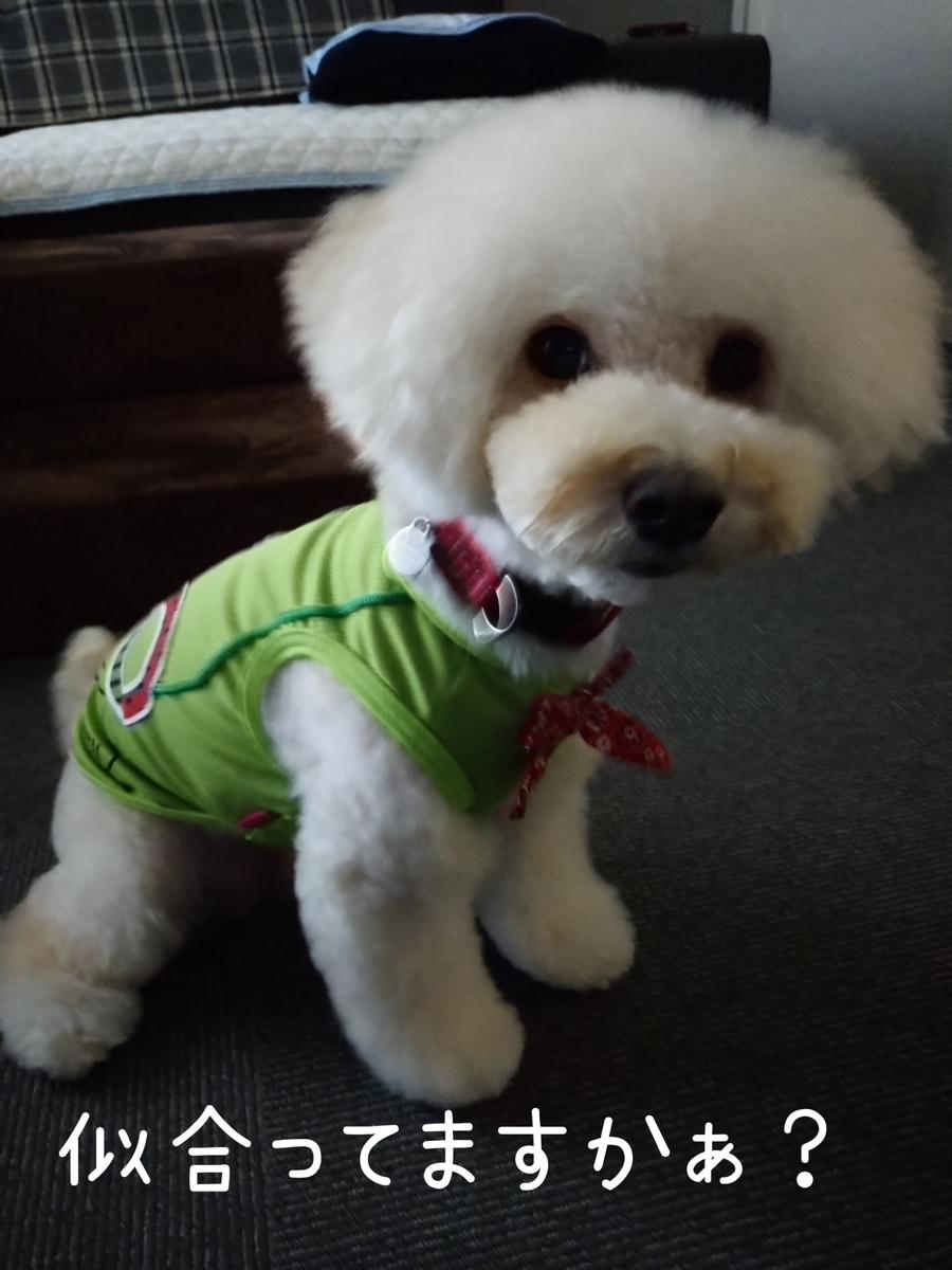 f:id:kotaro-dog:20210725220533j:plain