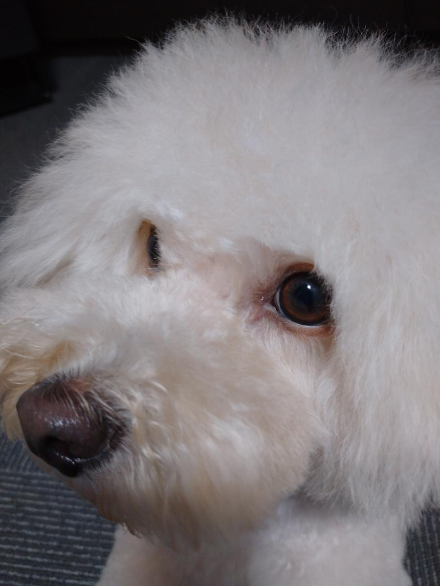 f:id:kotaro-dog:20210727000103j:plain