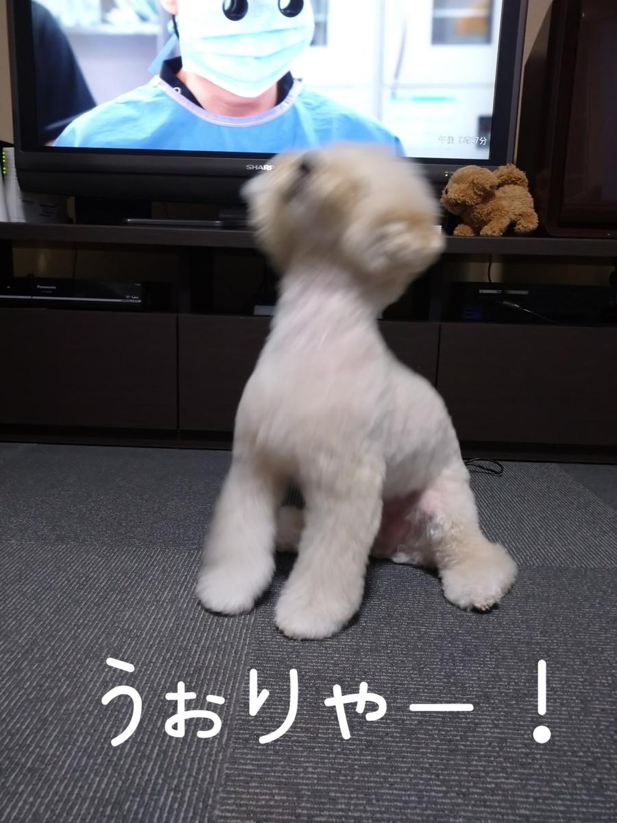 f:id:kotaro-dog:20210727011826j:plain