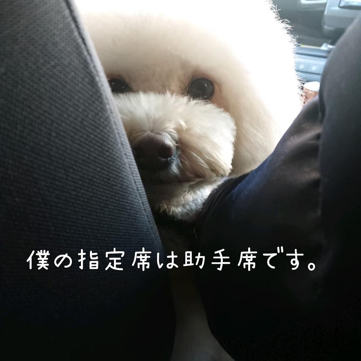 f:id:kotaro-dog:20210728013224j:plain