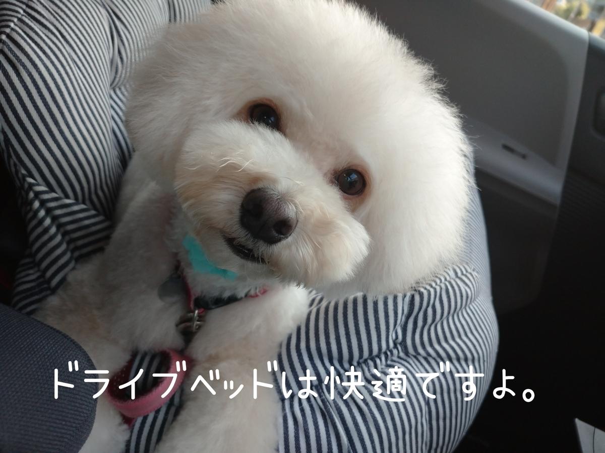f:id:kotaro-dog:20210728015052j:plain