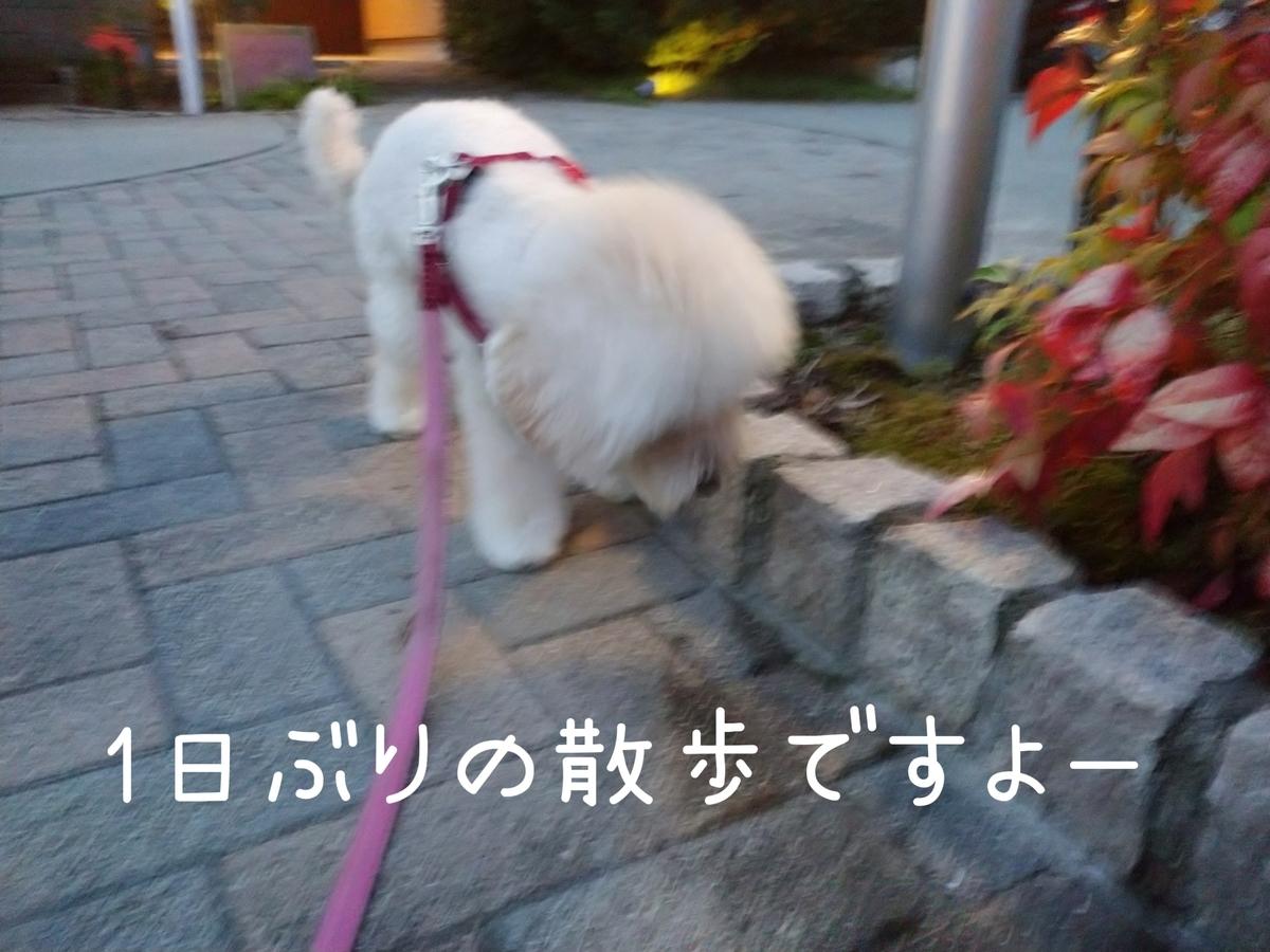f:id:kotaro-dog:20210801194850j:plain