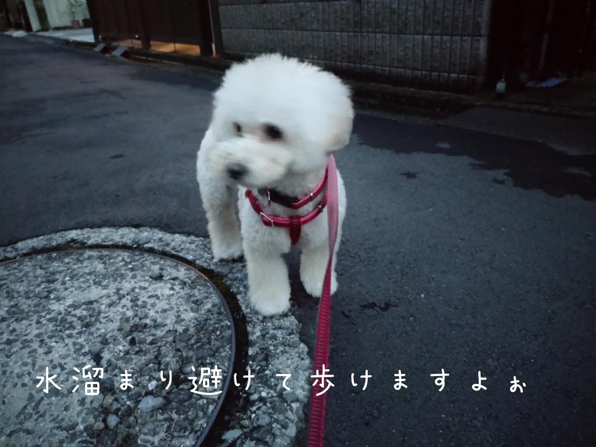 f:id:kotaro-dog:20210801210029j:plain