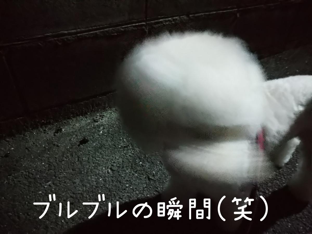 f:id:kotaro-dog:20210804012528j:plain