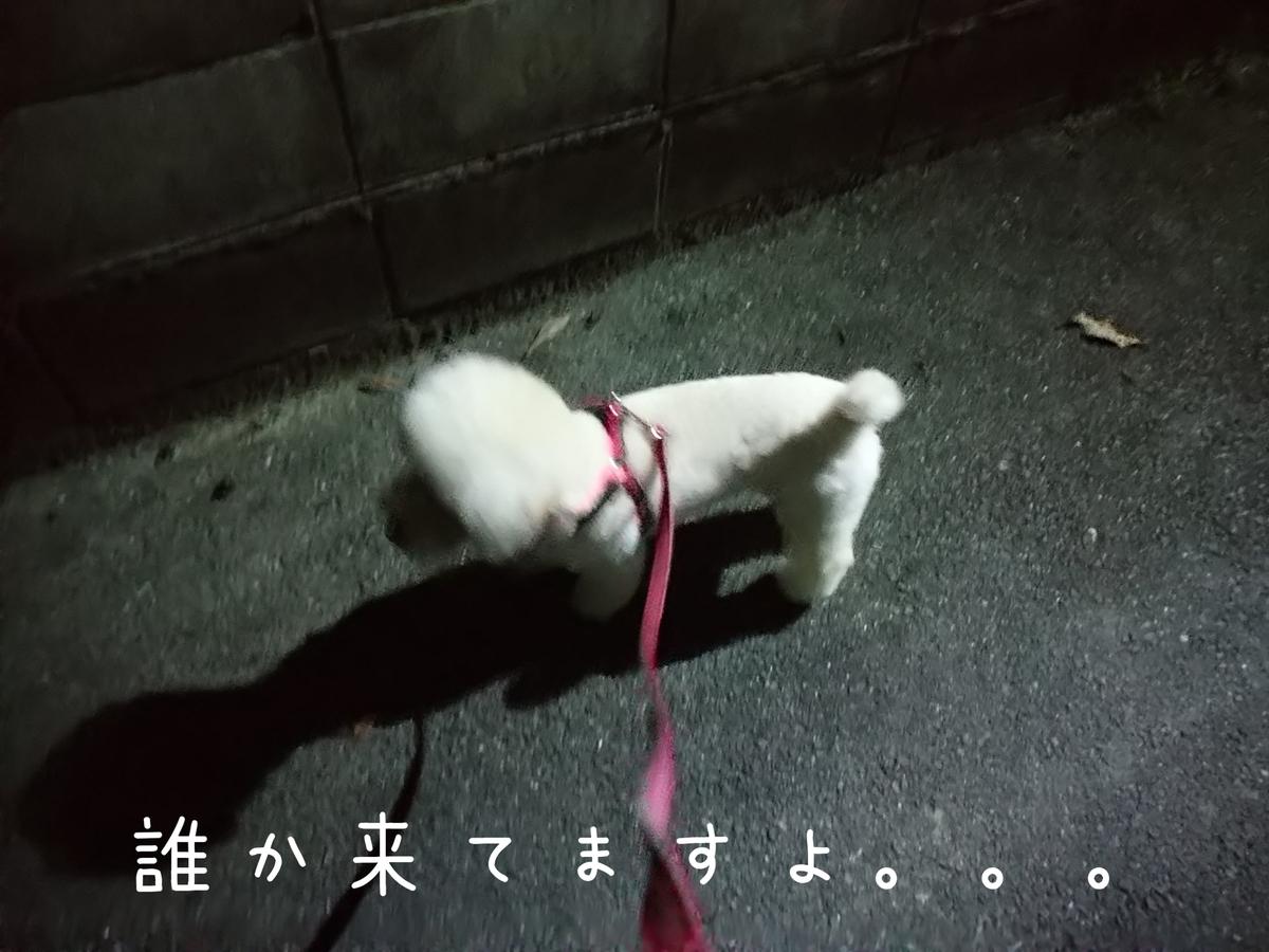 f:id:kotaro-dog:20210804012555j:plain