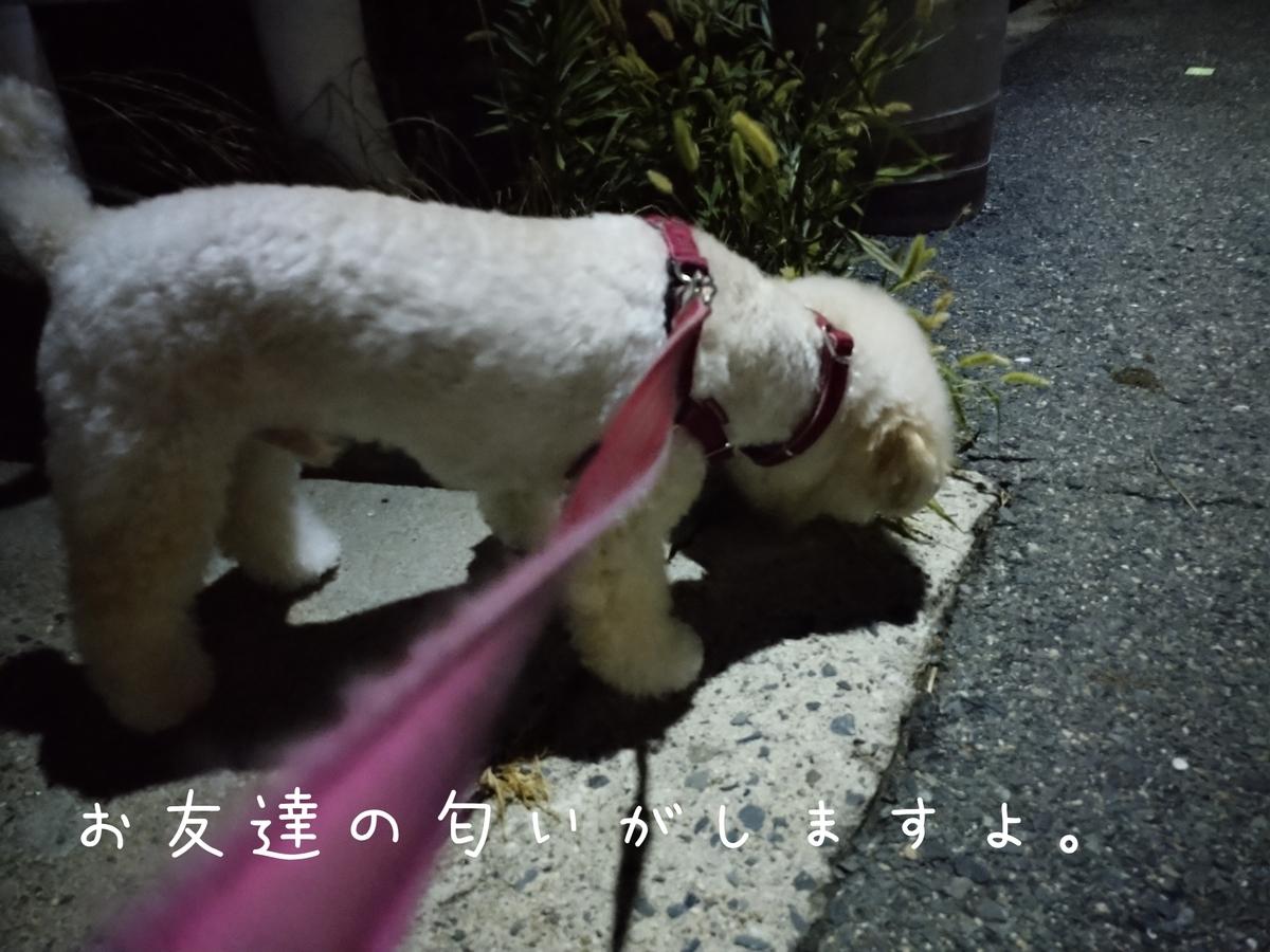 f:id:kotaro-dog:20210804012614j:plain