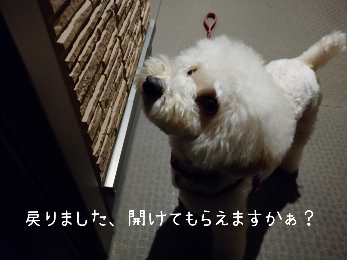 f:id:kotaro-dog:20210804012659j:plain