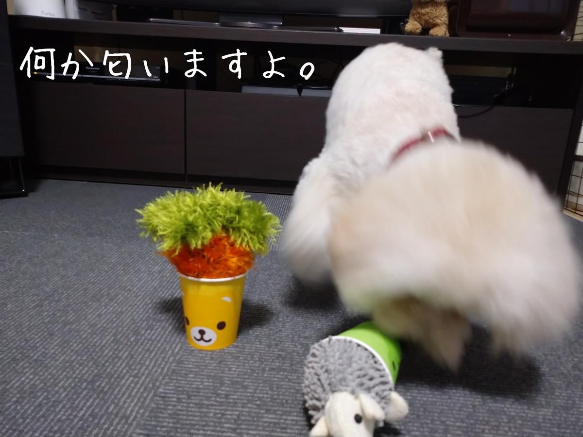 f:id:kotaro-dog:20210806013122j:plain