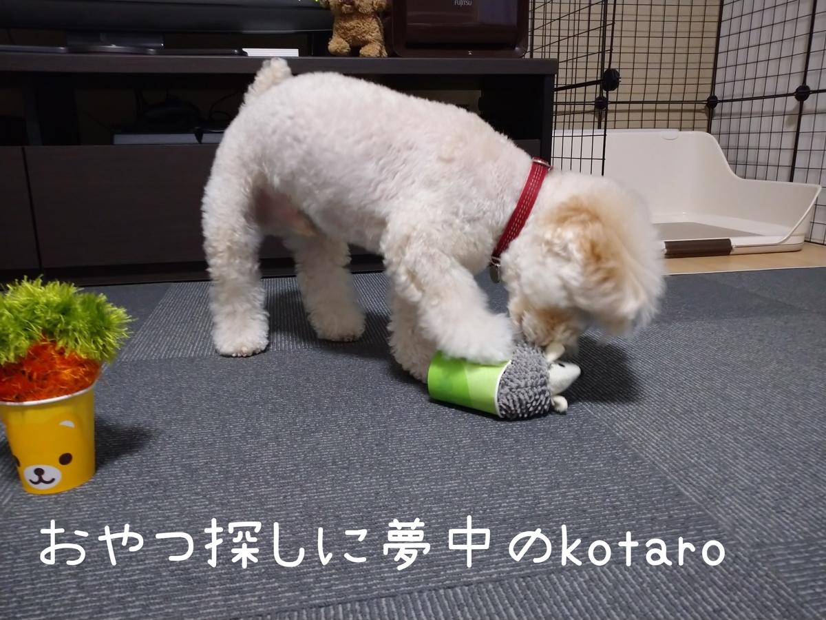 f:id:kotaro-dog:20210806013214j:plain