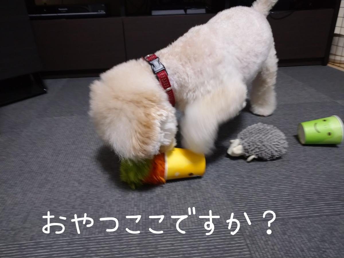 f:id:kotaro-dog:20210806013250j:plain
