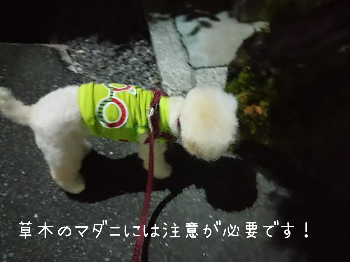 f:id:kotaro-dog:20210806013942j:plain