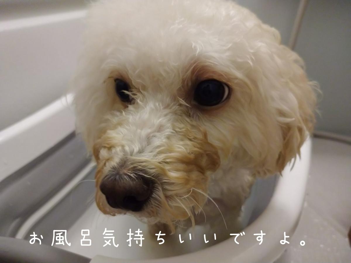 f:id:kotaro-dog:20210808144304j:plain