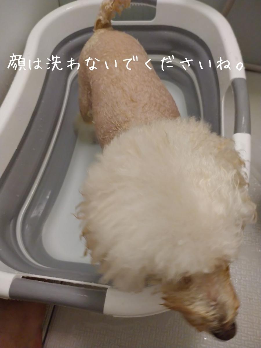 f:id:kotaro-dog:20210808144434j:plain