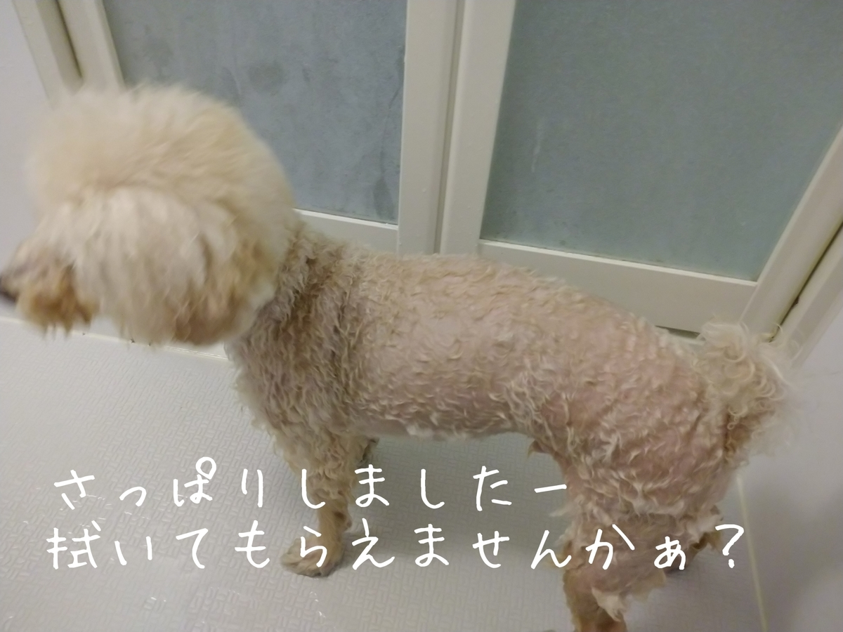 f:id:kotaro-dog:20210808144532j:plain