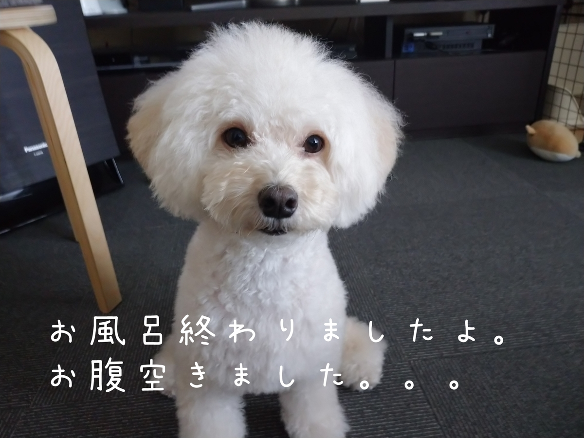 f:id:kotaro-dog:20210808144633j:plain