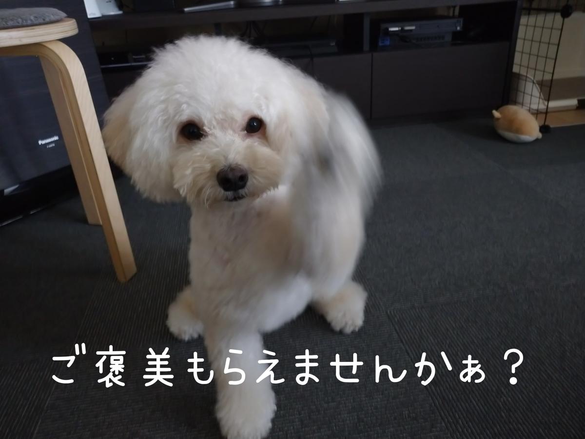 f:id:kotaro-dog:20210808144658j:plain