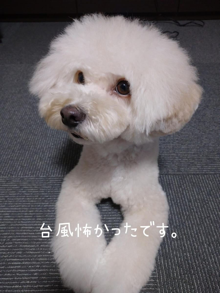 f:id:kotaro-dog:20210809232746j:plain