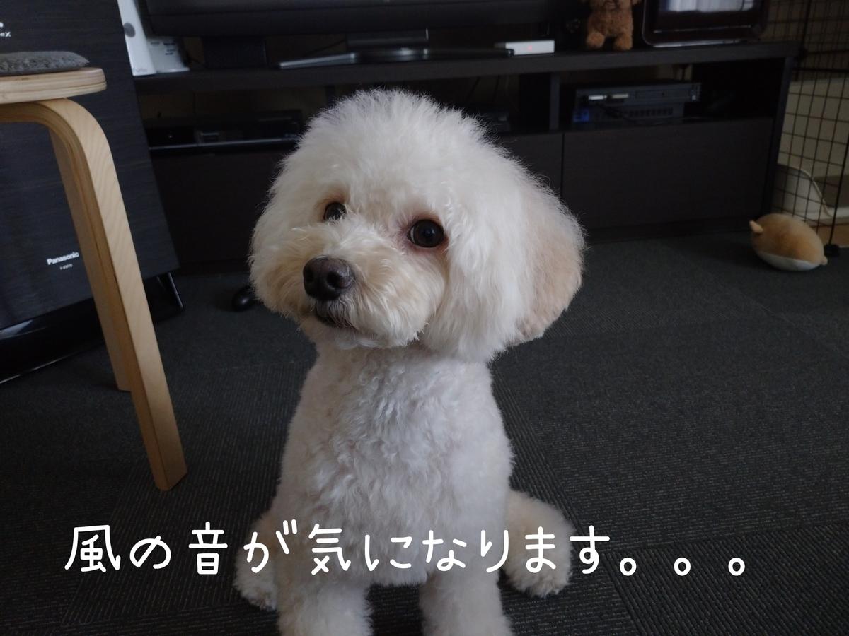 f:id:kotaro-dog:20210809234435j:plain
