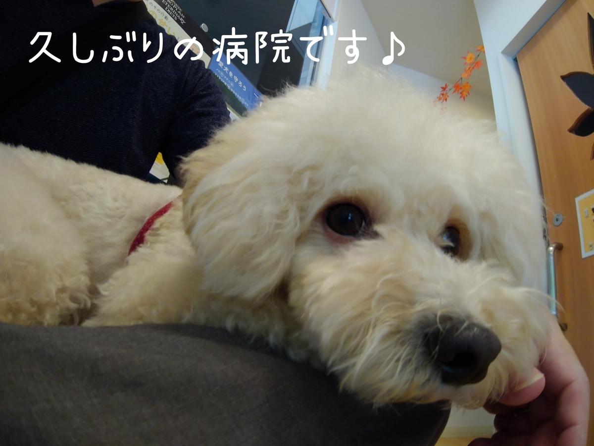 f:id:kotaro-dog:20210811021545j:plain