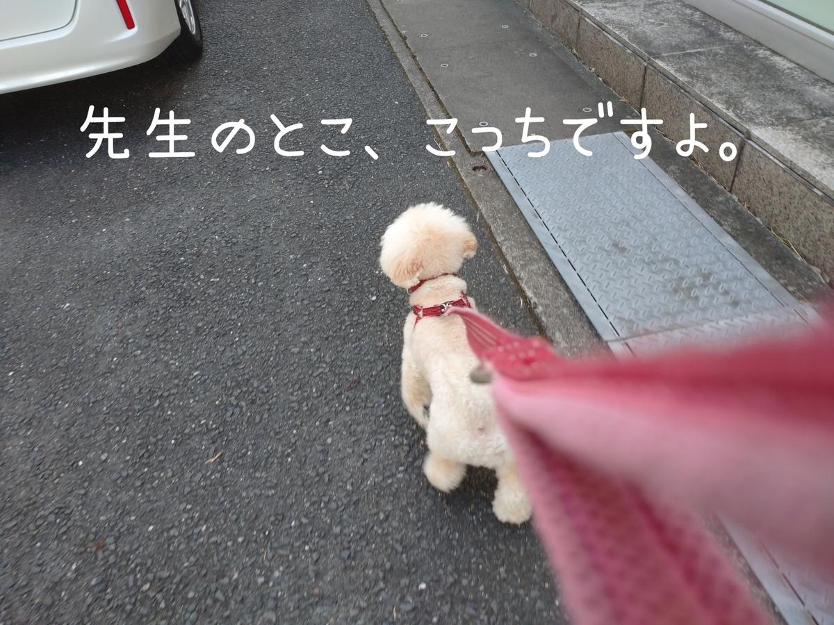 f:id:kotaro-dog:20210811021613j:plain