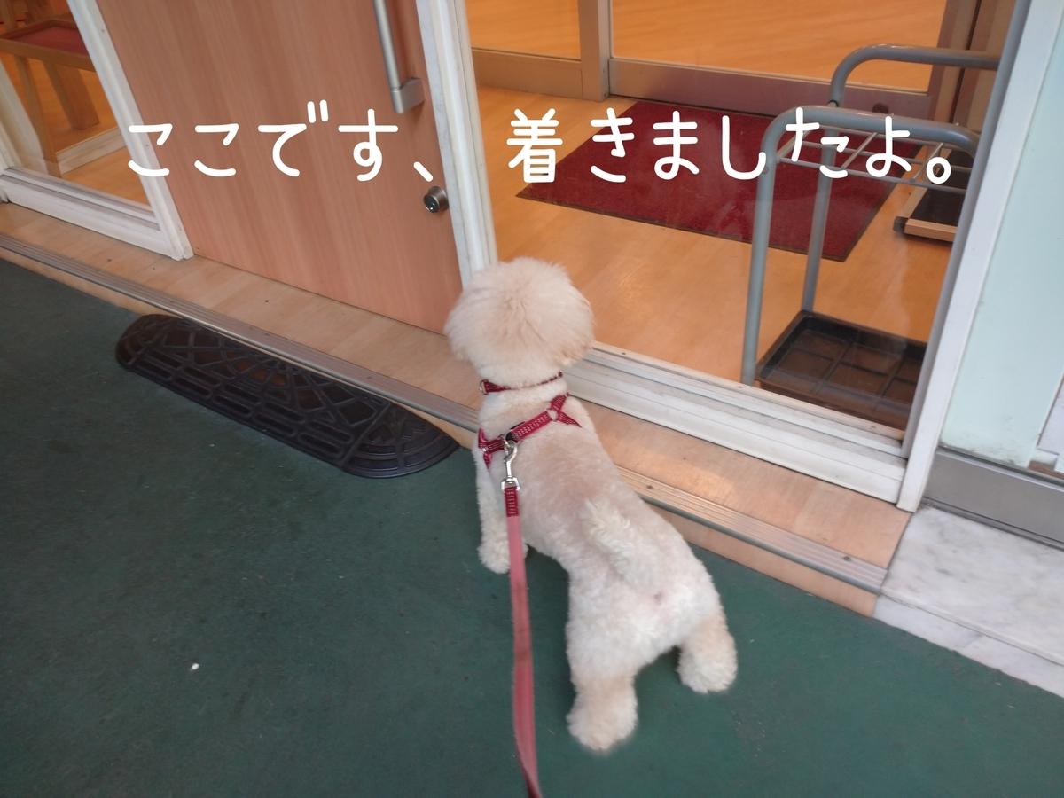 f:id:kotaro-dog:20210811021826j:plain