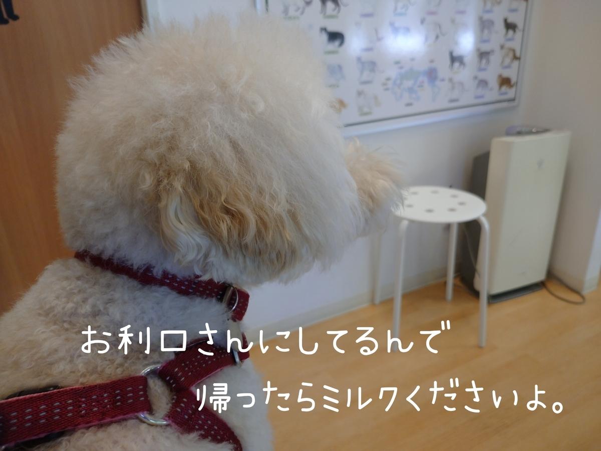 f:id:kotaro-dog:20210811022516j:plain